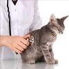Ветеринарные клиники в Козельске